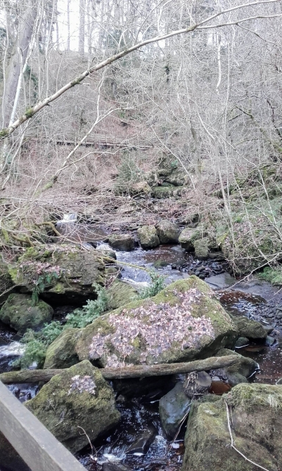 River at Hareshaw Linn