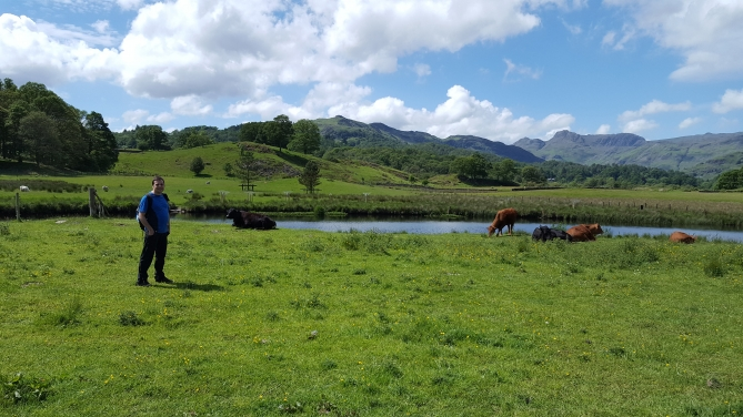 Me beside Cows and River in Lake District